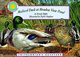 Mallard Duck at Meadow View Pond - a Smithsonian's Backyard Book